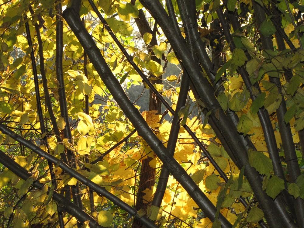 Jaunes d'automne