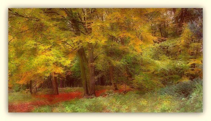 Jaunes de l'automne