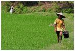 Java – Ohne Fleiß keinen Reis