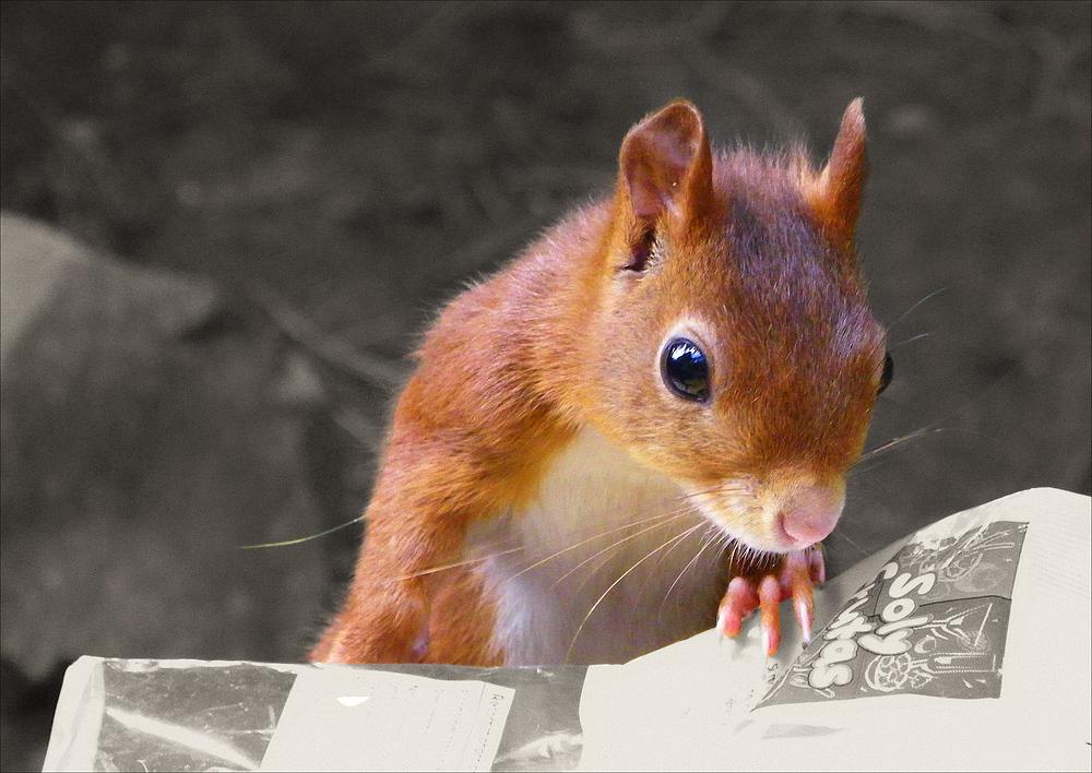 Je choisis des noisettes s'il vous plait .