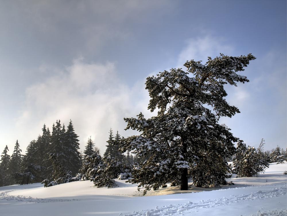 Je commence à rechauffer les arbres - Ich fange an den Bäumen einzuheizen