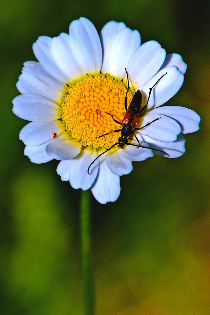 Je conte Fleurette!!!