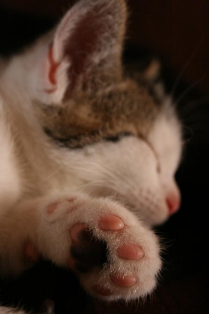 Je dors sur mes coussinets