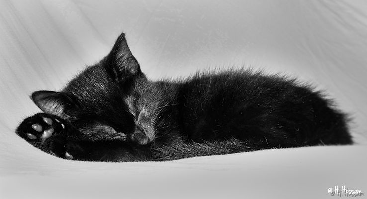 je dors, tu dors, il dort, nous dormons ...et vous ??
