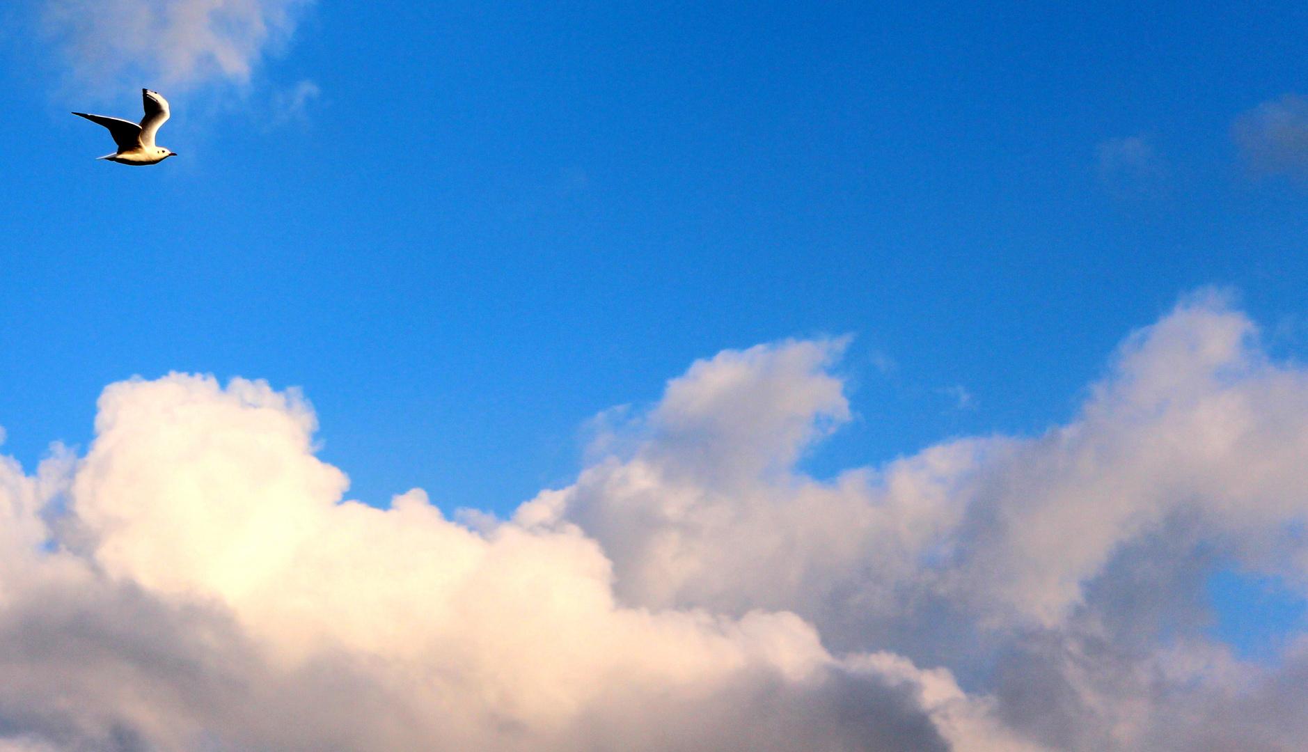 Je höher wir uns erheben, um so kleiner erscheinen wir denen, welche nicht fliegen können.