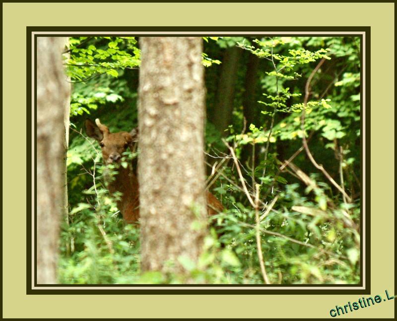 je me cache car j'ai un petit probleme sur un bois