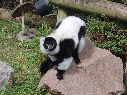 je ressemble a un singe mais n en suis pas un qui suis-je ?