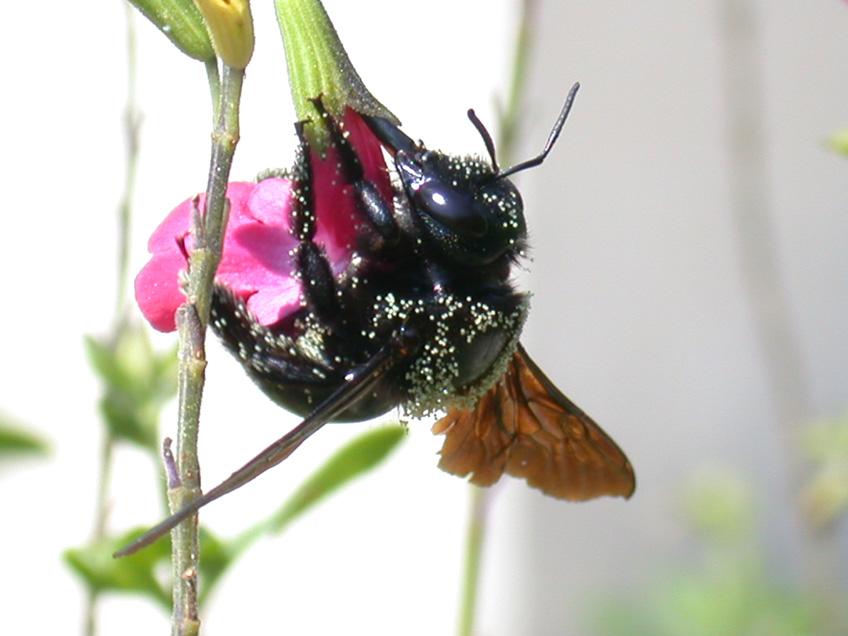 je sirote mon petit nectar !!!