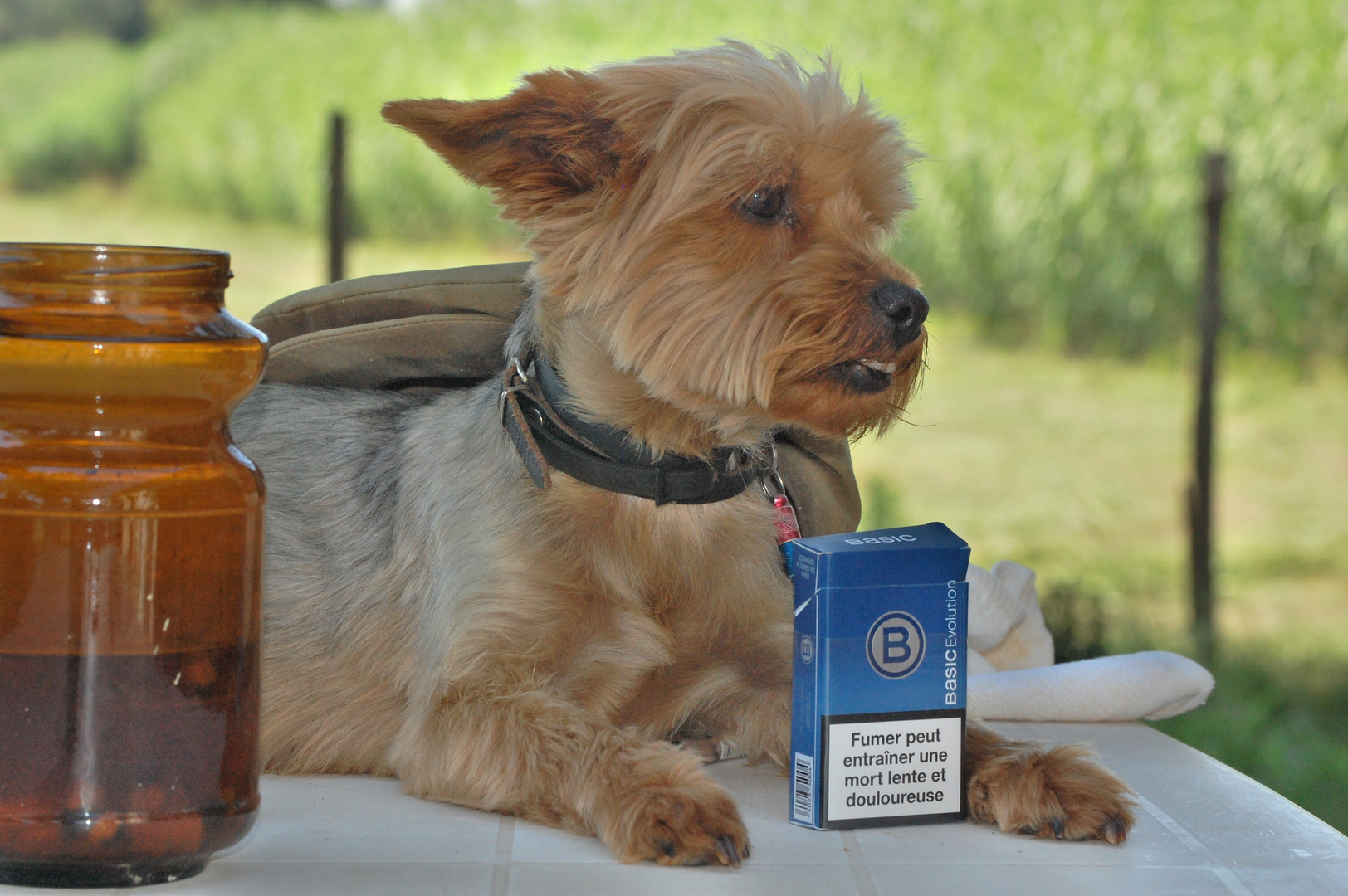 Je suis Anti-Tabac