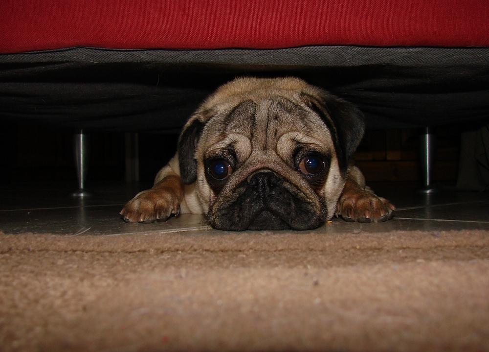 je suis caché... sous le canapé... photo et image