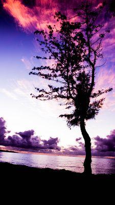 Je suis né ici ! (île de la Réunion)