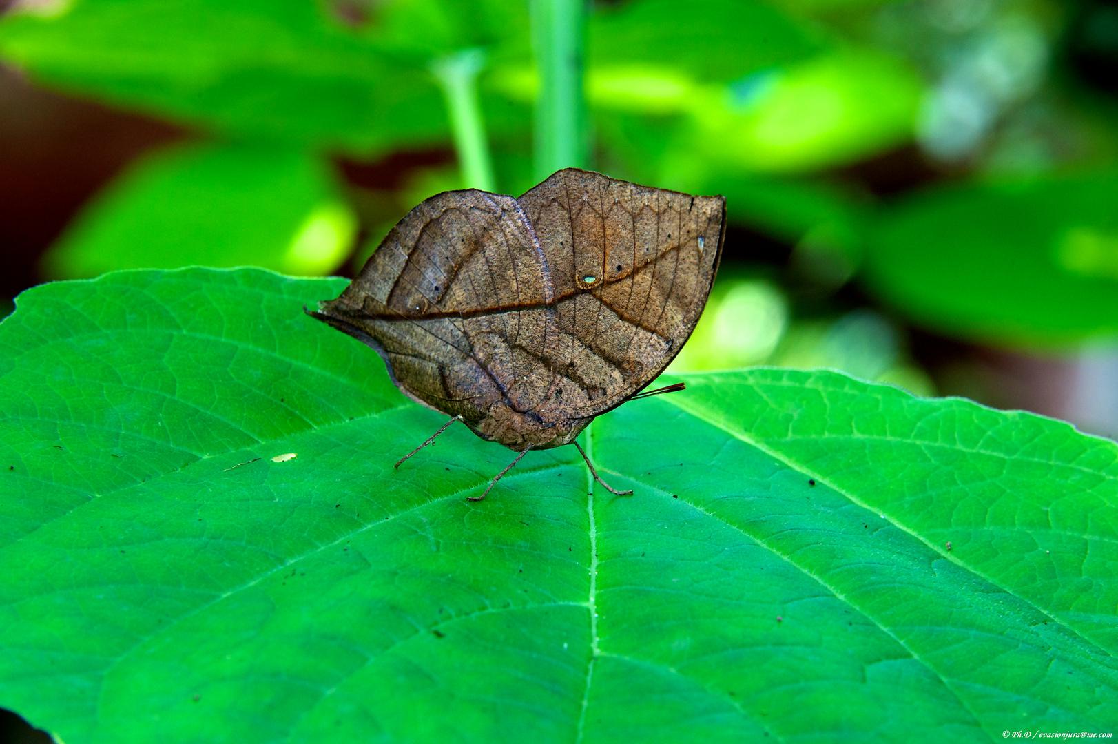 Je suis un papillons ;-)