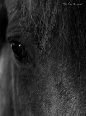 Je vois dans le regard du cheval la beauté d'un monde d'avant.