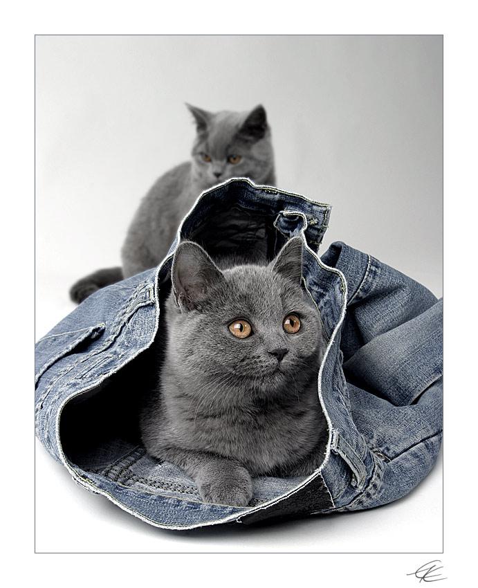 - jeans on II -