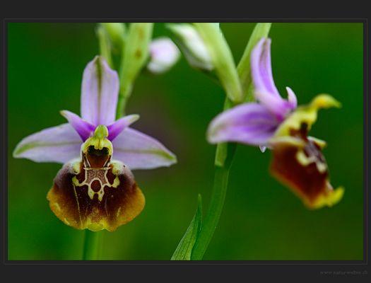 Jede Blüte ein Unikat