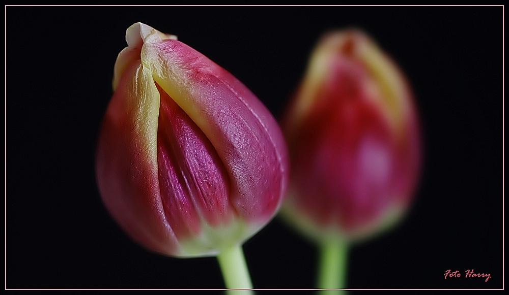 Jede Blüte ist vergänglich,- zum Glück auch der Winter .....
