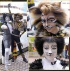 Jede Menge Katzen auf der Buchmesse (3)
