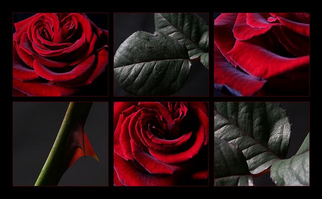 Jede Rose....