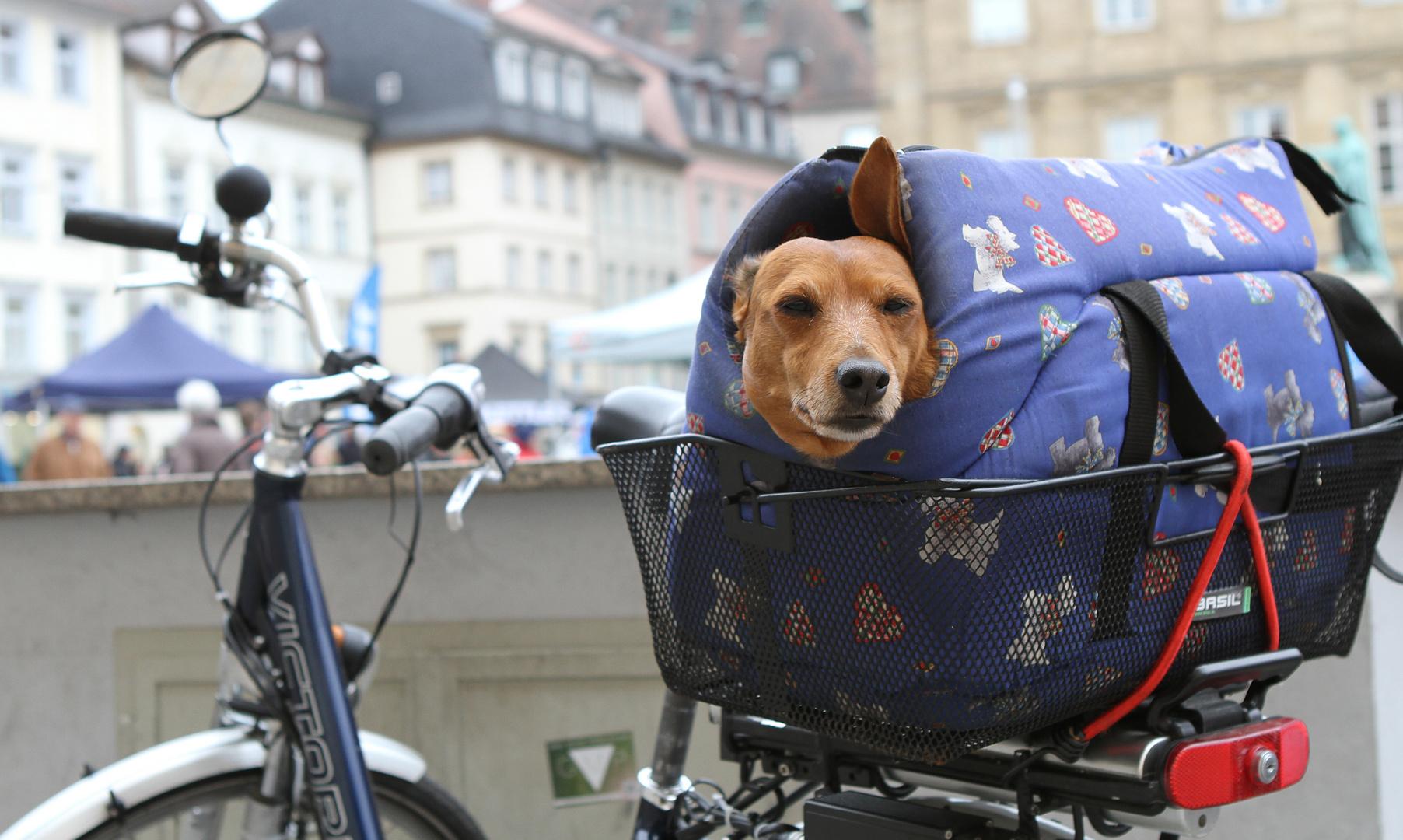Jedem sein Fahrrad