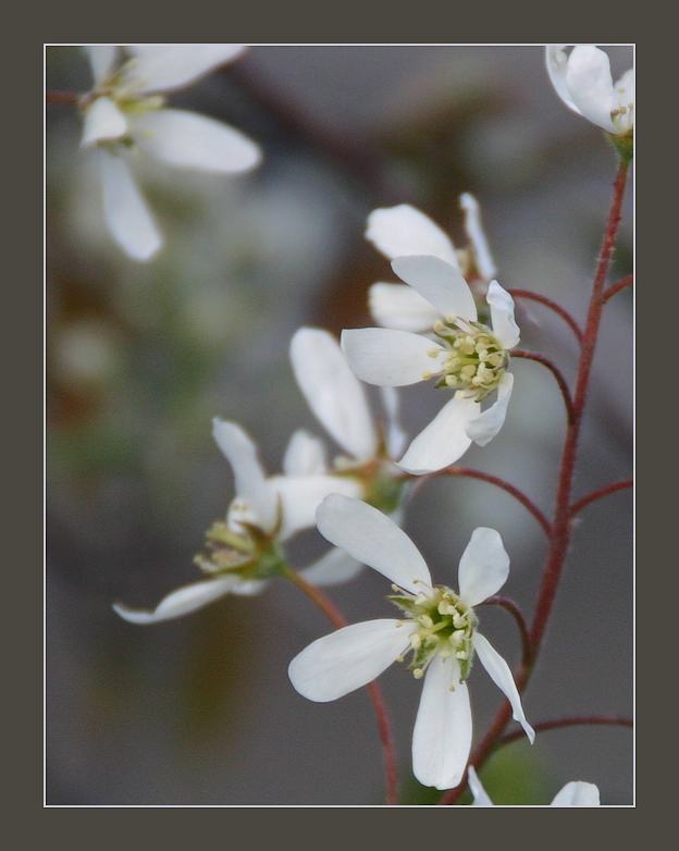 Jeder Frühling...