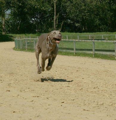Jeder-Hund-Rennen 2