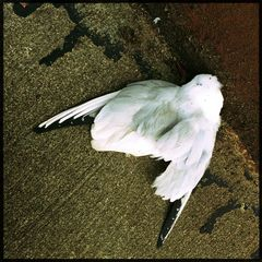 Jeder Traum vom Fliegen endet. .