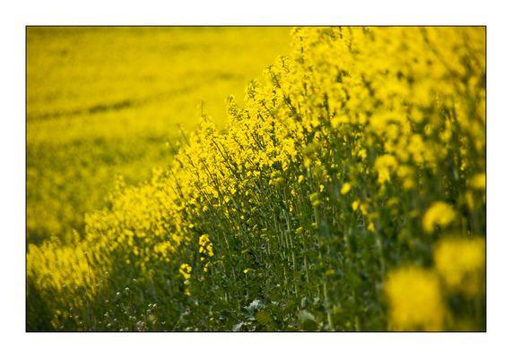 Jedes Gelb hat seine Zeit