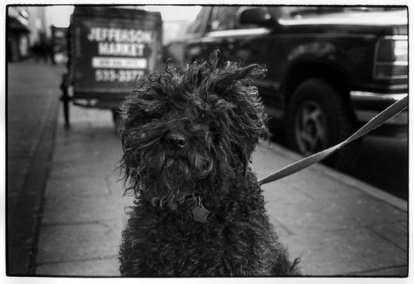 Jefferson Market. Manhattan Dez. 2000