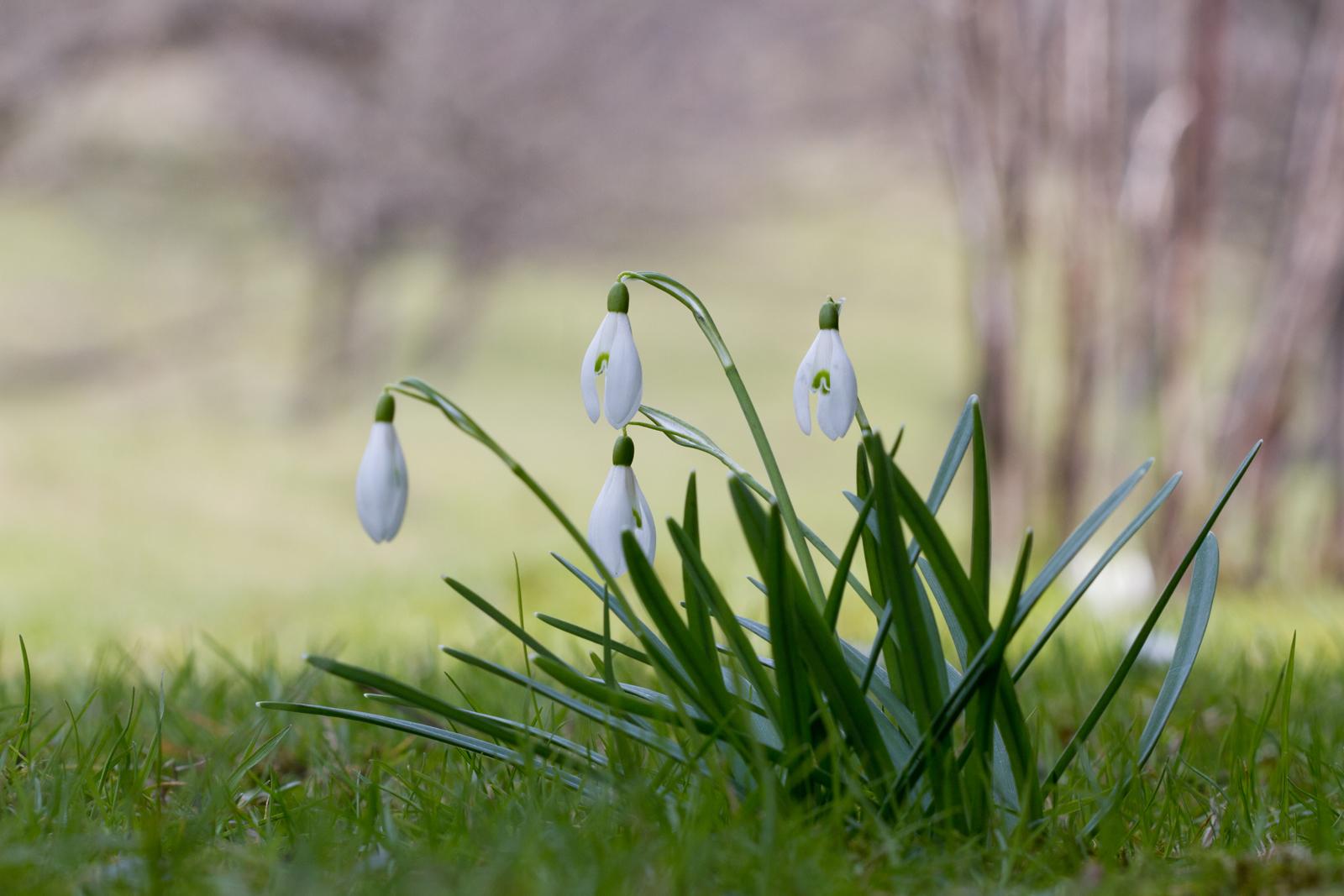 Jeglicher Unkenrufe zum Trotz - es ist Frühjahr -