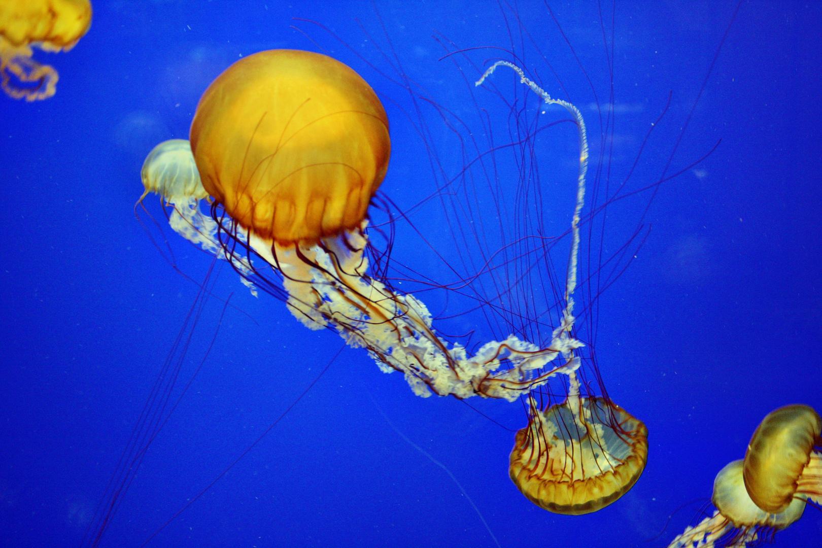 Jelly-Dance