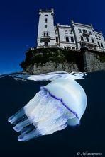 Jellyfish & castle
