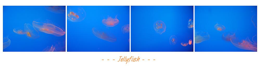 Jellyfish ...