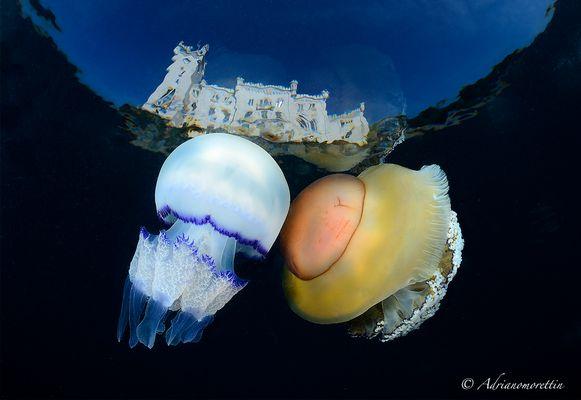 Jellyfish kiss