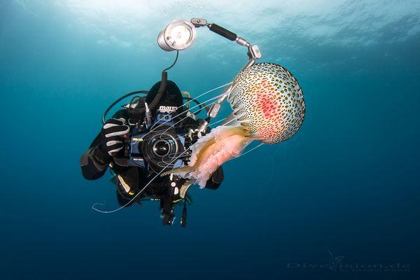 Jellyfish shooting