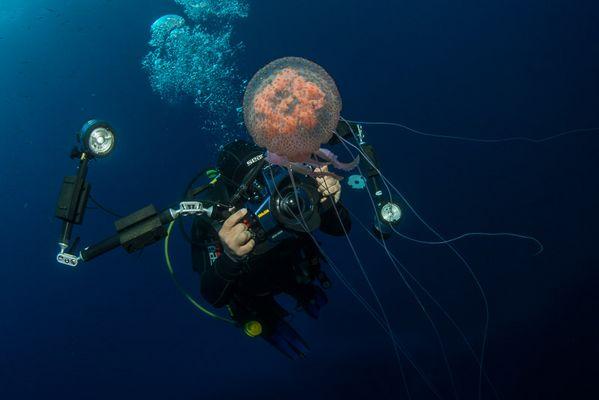 Jellyfish shooting II