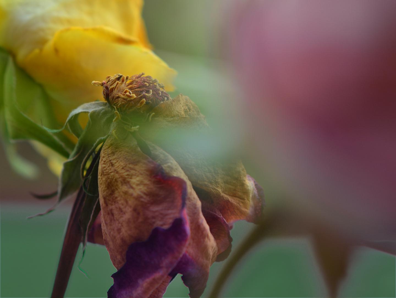 Jenseits der Blüte
