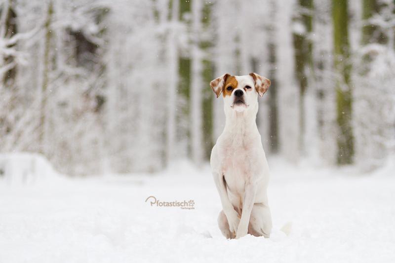 Jerry im Winterwonderland