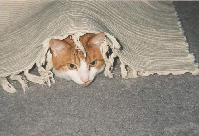Jerry unterm Teppich