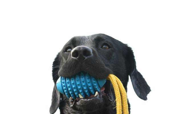 Jessy mit ihrem Lieblingsspielzeug