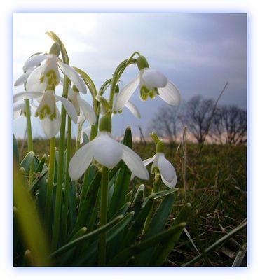 Jetzt fängt das schöne Frühjahr an ...