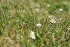 Jetzt ist der Frühling da!!