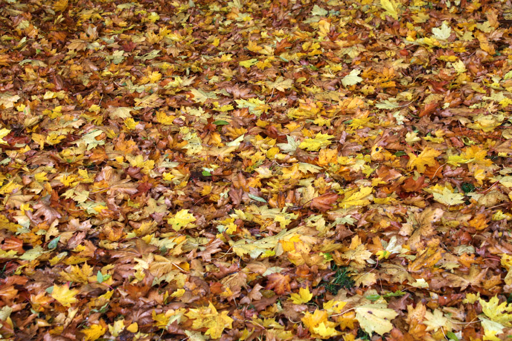 Jetzt ist offiziell Herbst