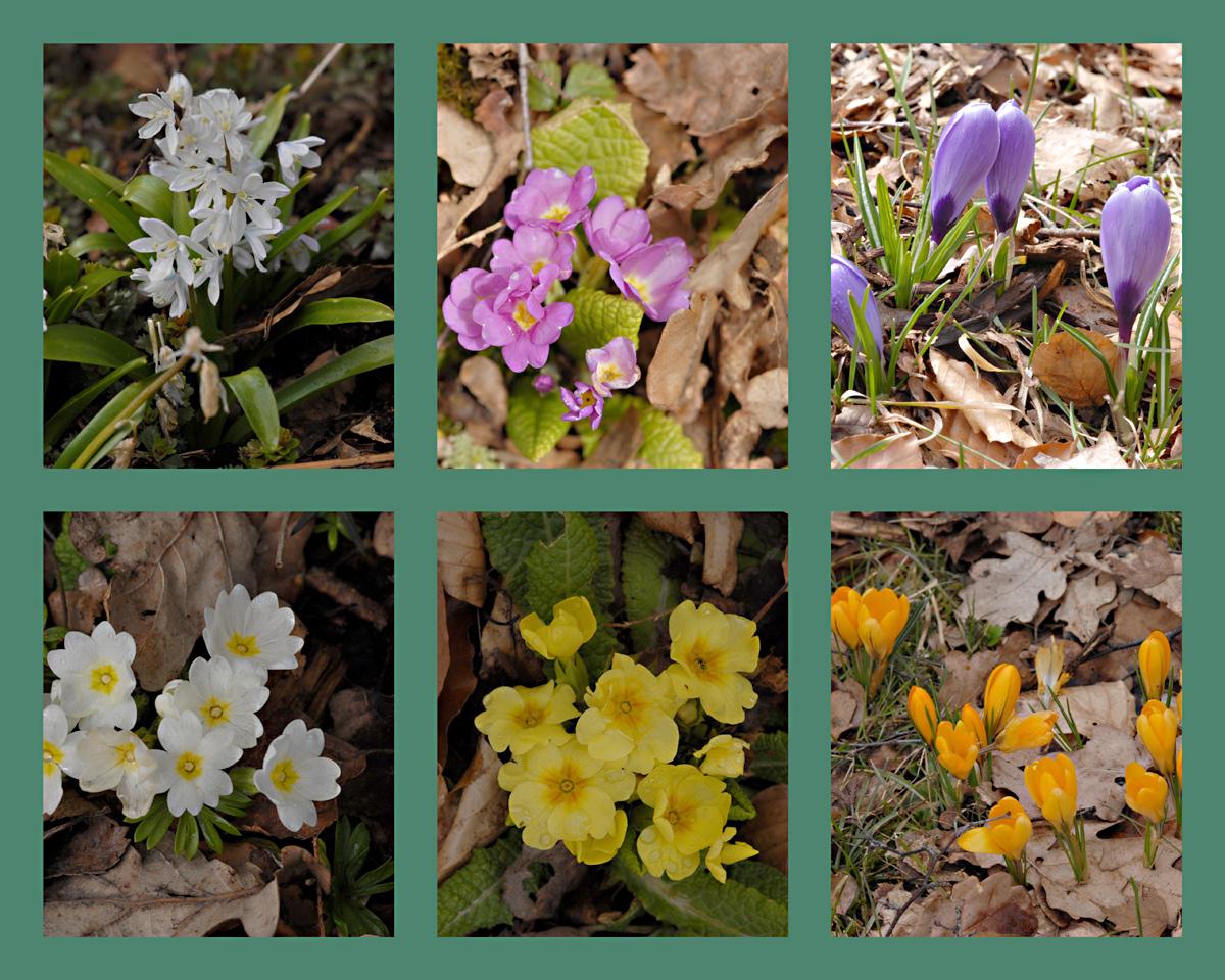 Jetzt ist sogar bei uns der Frühling eingetroffen.