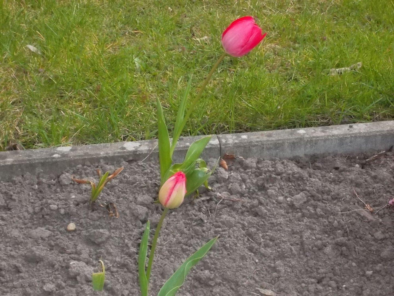 Jetzt kann der Frühling kommen!