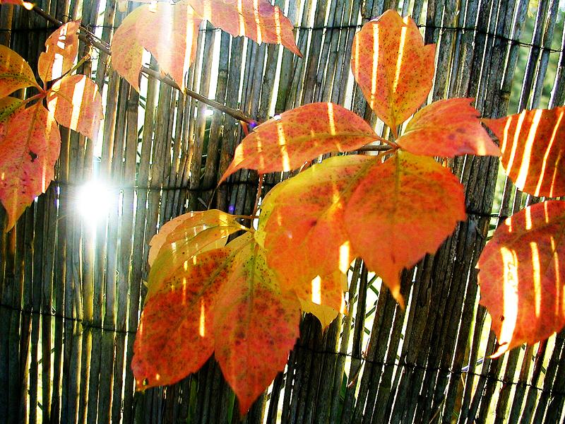 Jetzt komme ich doch noch mit Herbstblättern........