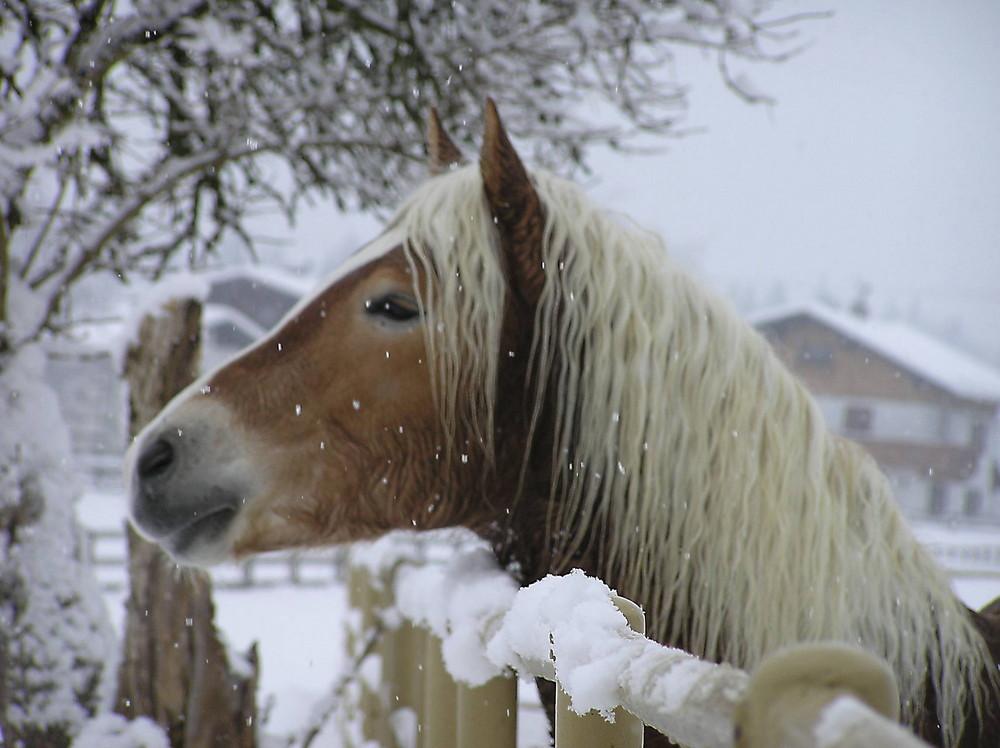 Jetzt kommt der Schnee...