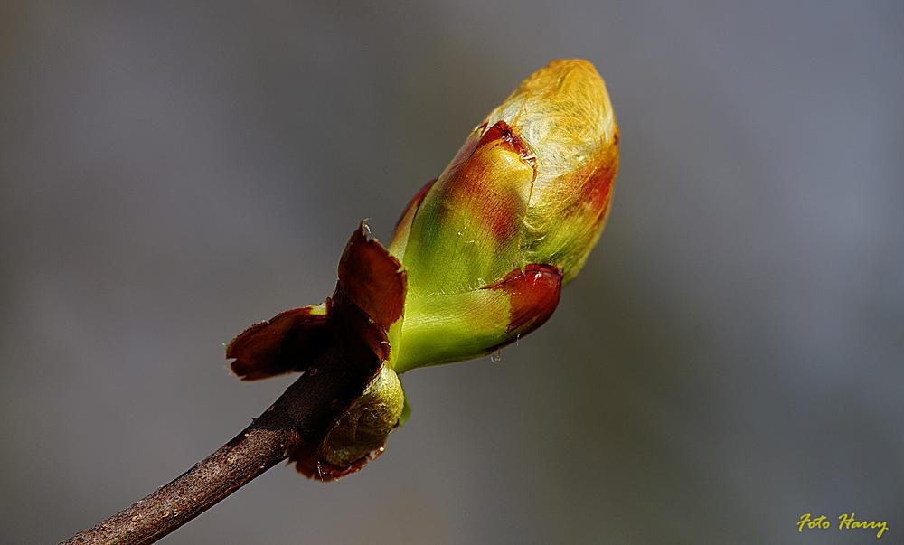 Jetzt kommt er unaufhaltsam ....... der Frühling.