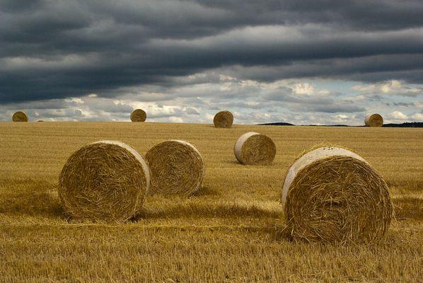 Jetzt liegen sie wieder faul auf den Feldern herum...