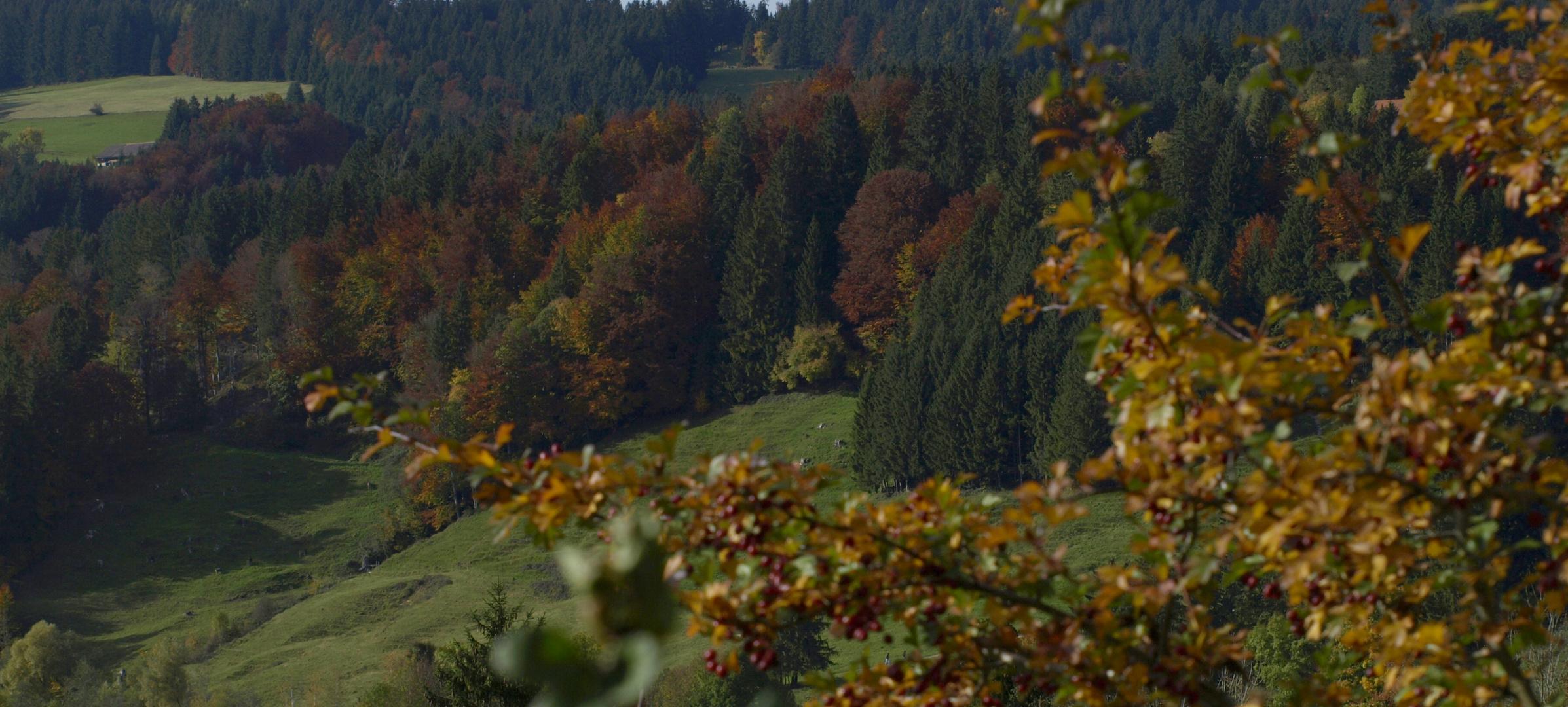 jetzt wird´s Herbst