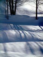 Jeu d'ombres sur la neige